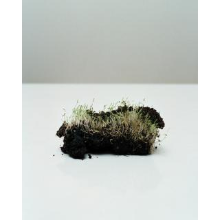 Chih-Chien Wang, Grass with Earth, 2005.