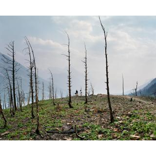 Andreas Rutkauskas, Aftermath of the Kenow Fire, Waterton Lakes National Park, 2019